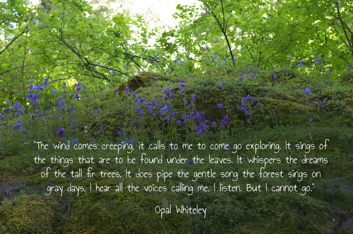 opal whiteley wind quote